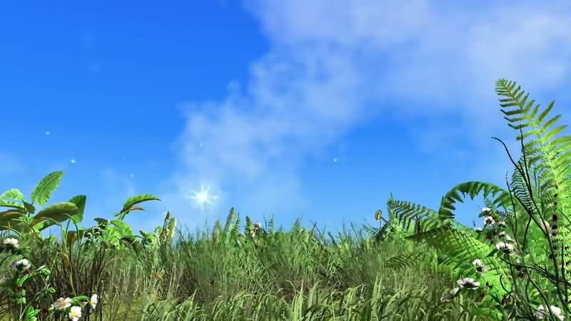 蓝天白云风吹动的草地.jpg