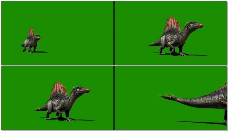绿屏抠像棘龙恐龙.jpg