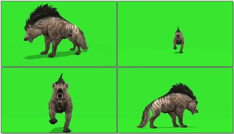绿屏抠像奔跑的鬣狗.jpg
