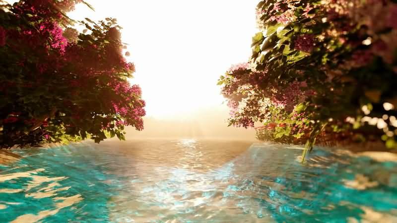 [2K]清澈的溪水粉色的桃花视频素材