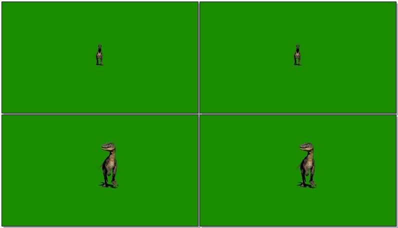 绿屏抠像禽猛龙恐龙视频素材