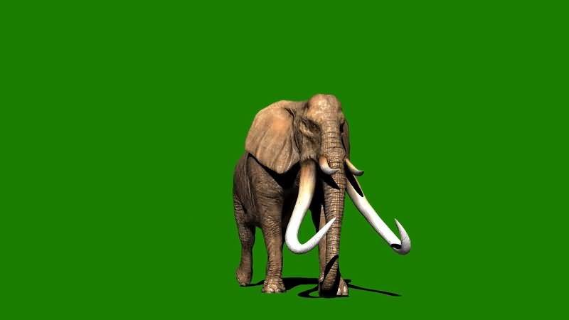 绿屏抠行走的猛犸象.jpg