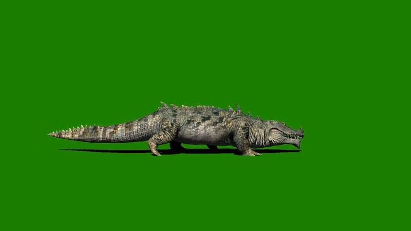 绿屏抠像爬行的尼罗河鳄鱼.jpg