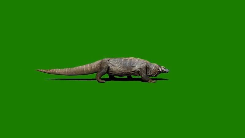 绿屏抠像爬行的科摩多巨龙..jpg
