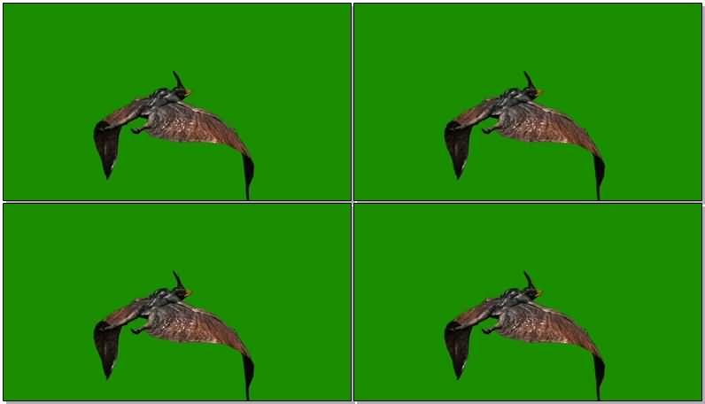 绿屏抠像飞行的翼龙.jpg
