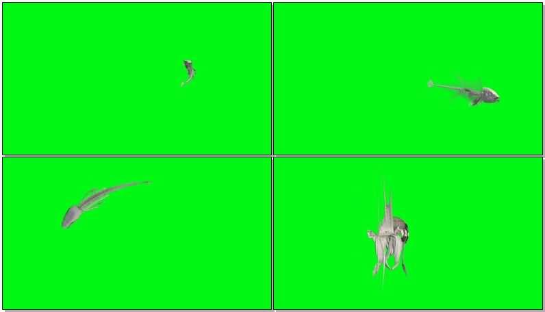 绿屏抠像游动鱼骨鱼刺.jpg