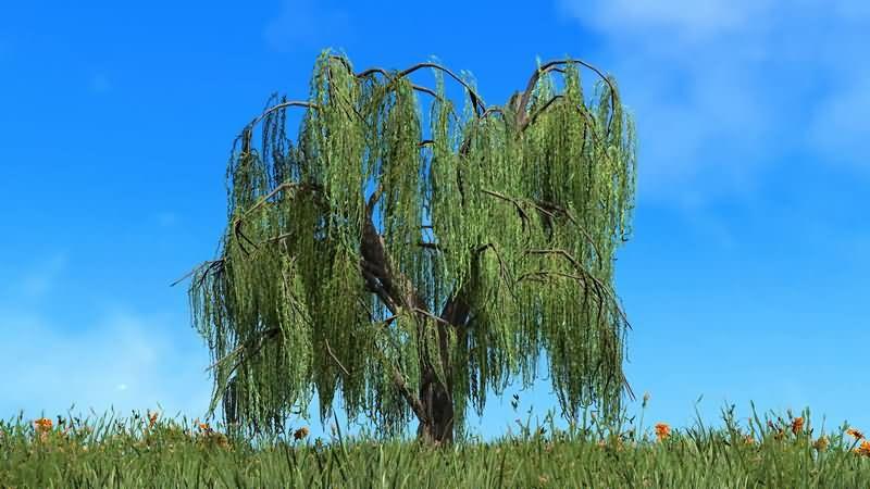 [4K]蓝天白云草地中的柳树片头背景
