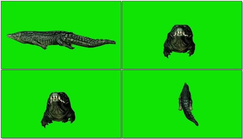 绿屏抠像游泳的鳄鱼.jpg