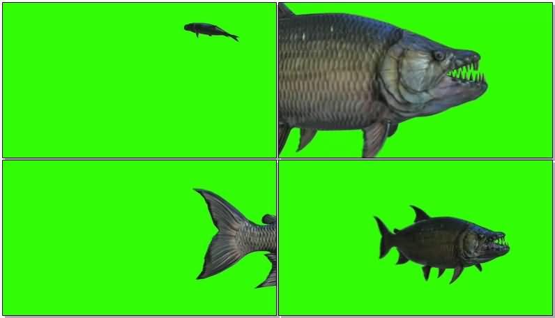 绿屏抠像游动的食人鱼.jpg