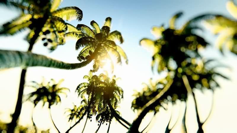 [2K]仰视椰子树阳光片头背景视频素材
