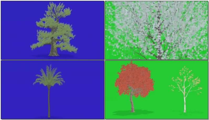 绿屏抠像狂风中的各种树木.jpg