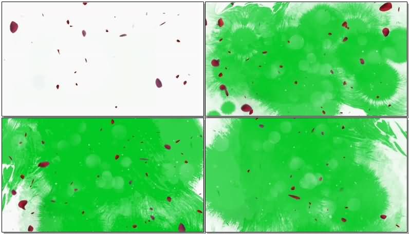 绿屏抠像飘落的玫瑰花瓣.jpg