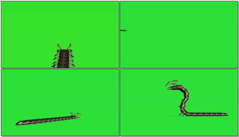 [4K]绿屏抠像爬行的蜈蚣.jpg