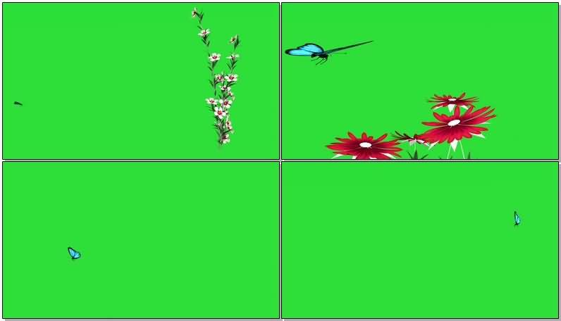 绿屏抠像采花的蝴蝶.jpg