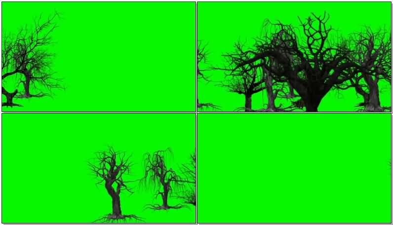 绿屏抠像枯萎的树木.jpg