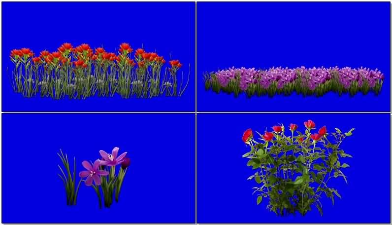 蓝屏抠像各种野花野草.jpg