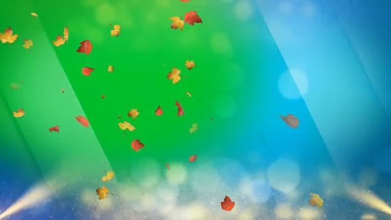 绿屏抠像阳光照耀枫叶飘落.jpg