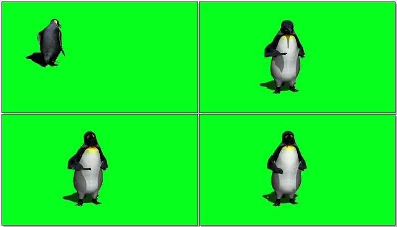 绿屏抠像南极企鹅.jpg