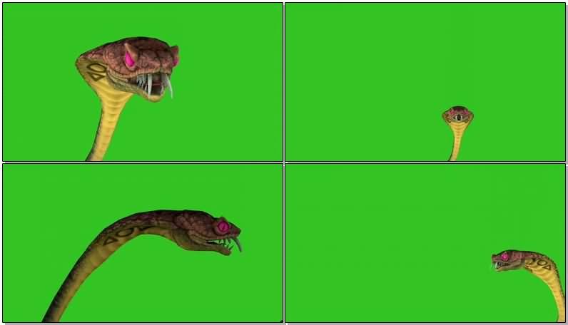 绿屏抠像眼镜蛇.jpg