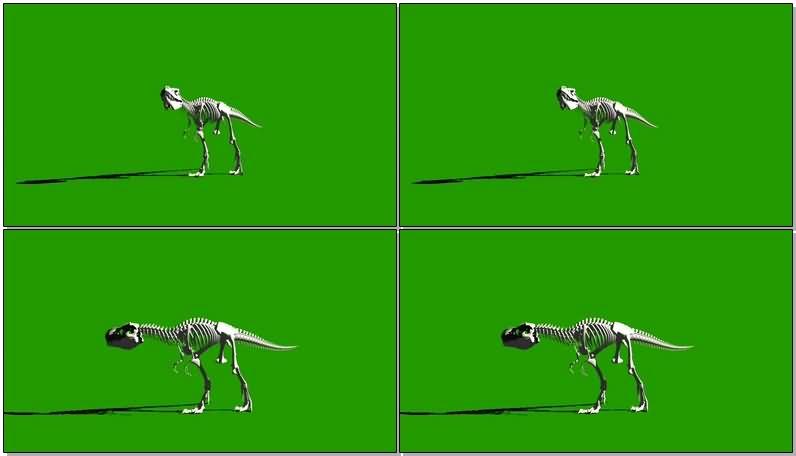 绿屏抠像行走的恐龙骨骼视频素材