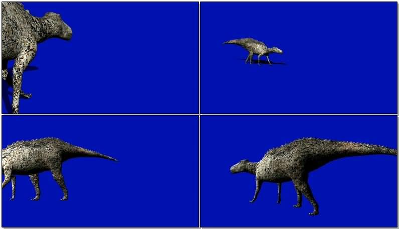 蓝屏抠像侏罗纪冠龙视频素材