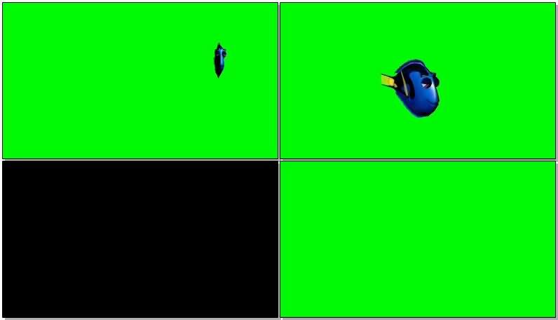 绿屏抠像海底总动员小鱼多莉.jpg