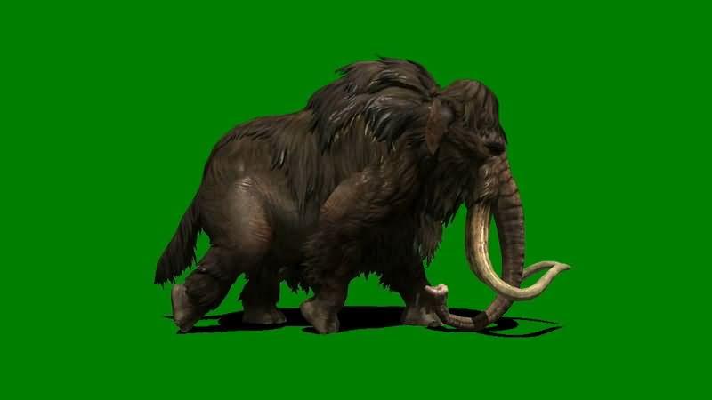 绿屏抠像行走的猛犸象.jpg