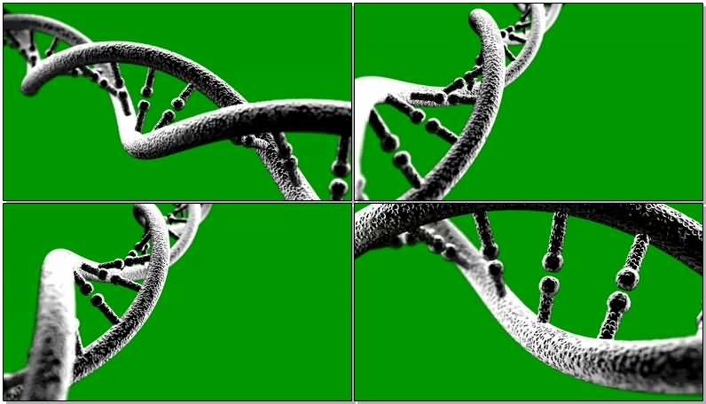 绿屏抠像细胞基因链条.jpg