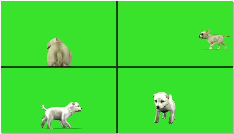 绿屏抠像卡通狗狗.jpg