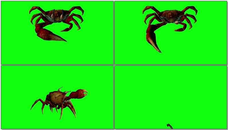 绿屏抠像螃蟹寄居蟹.jpg
