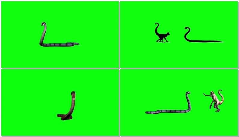 绿屏抠像蟒蛇水蟒.jpg