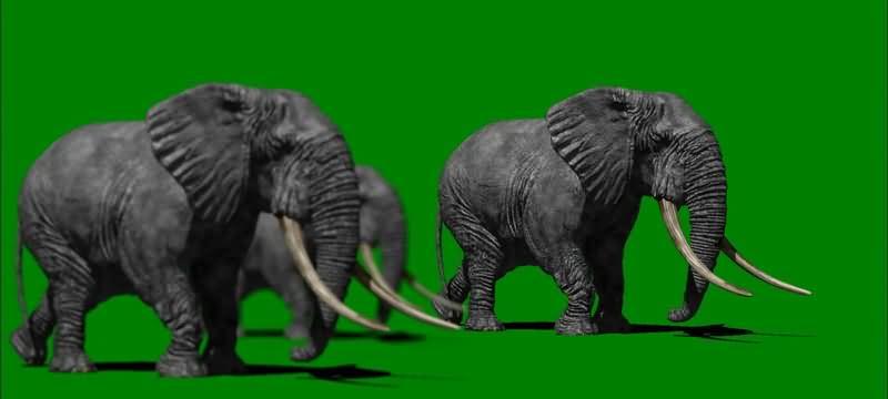 绿屏抠像行走的大象群.jpg