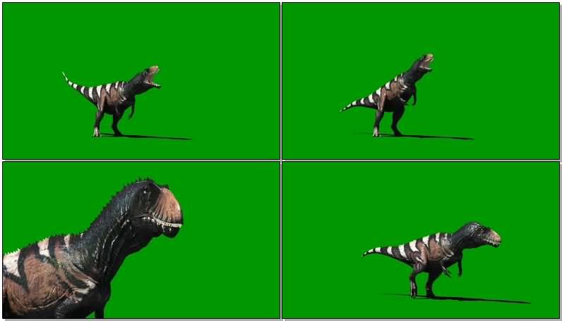 绿屏抠像高棘龙恐龙.jpg