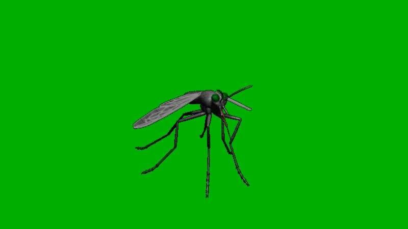 绿屏抠像飞行的蚊子.jpg