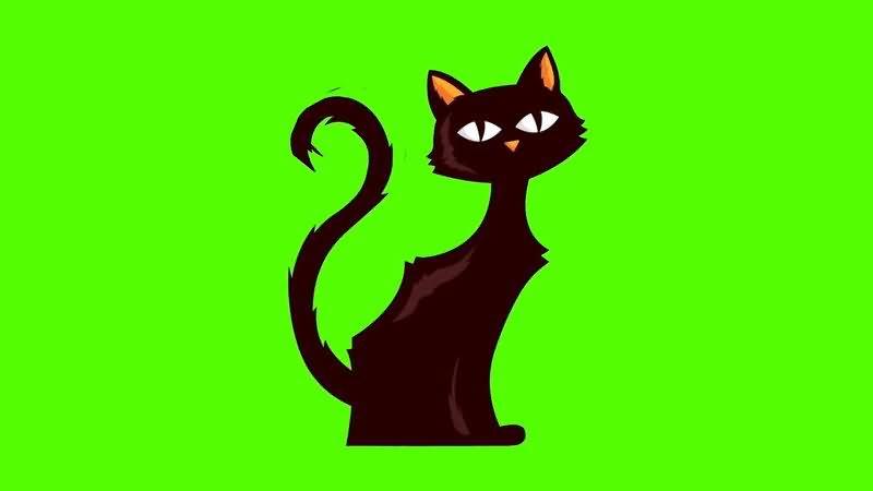绿屏抠像卡通猫咪.jpg
