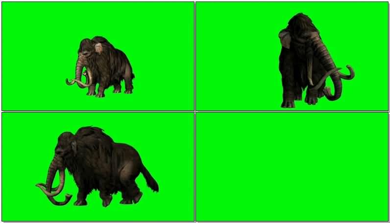 绿屏抠像行走的猛犸大象.jpg