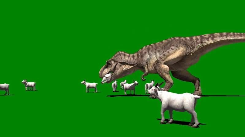 绿屏抠像吃羊的恐龙.jpg