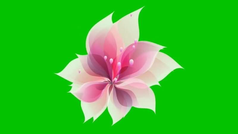 绿屏抠像粉色红花瓣.jpg