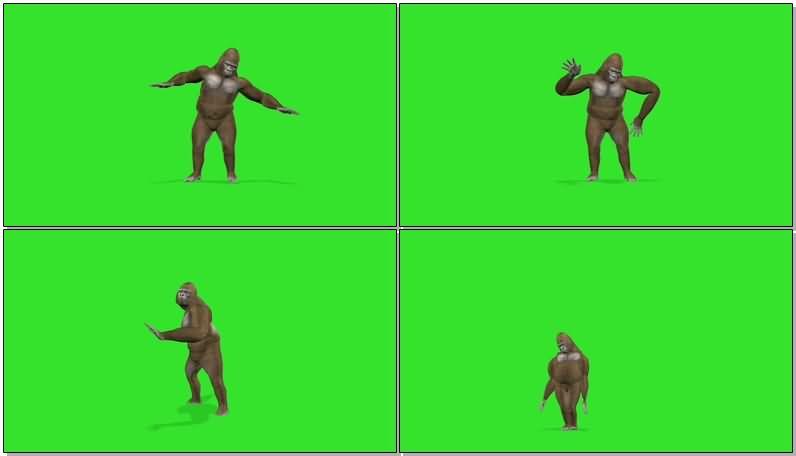 绿屏抠像跳舞的大猩猩.jpg