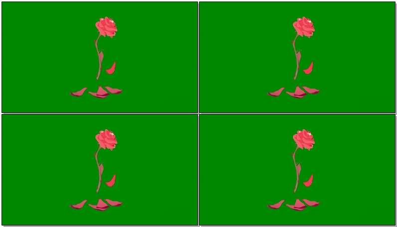 绿屏抠像凋谢的花瓣.jpg