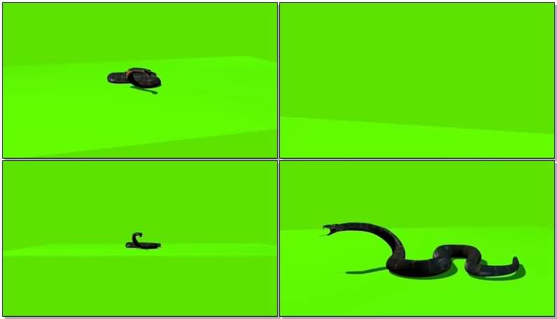 绿屏抠像爬行的蛇.jpg
