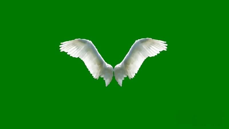 绿屏抠像白色的天使翅膀.jpg