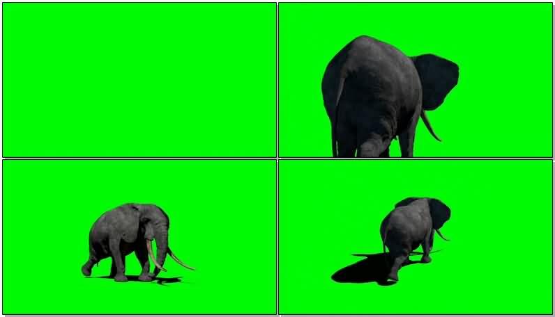 绿屏抠像大象.jpg