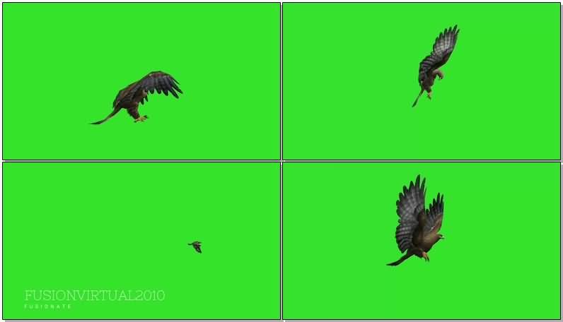 绿屏抠像飞翔的老鹰.jpg