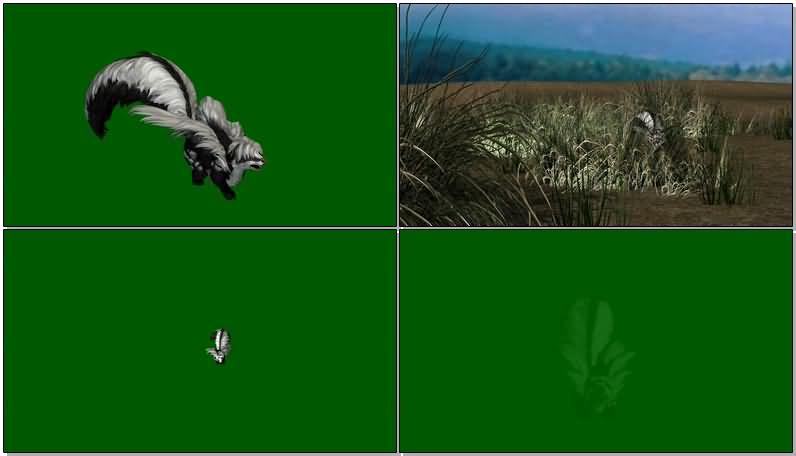 绿屏抠像行走的臭鼬.jpg
