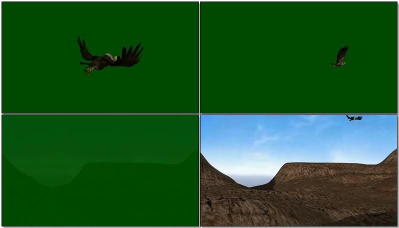 绿屏抠像飞行的秃鹫.jpg