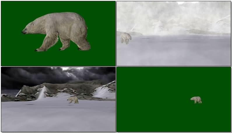 绿屏抠像北极熊.jpg