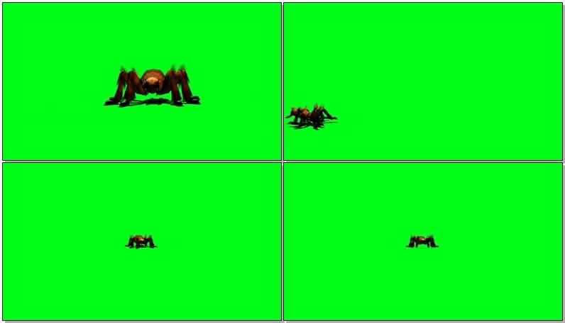绿屏抠像巨型蜘蛛.jpg