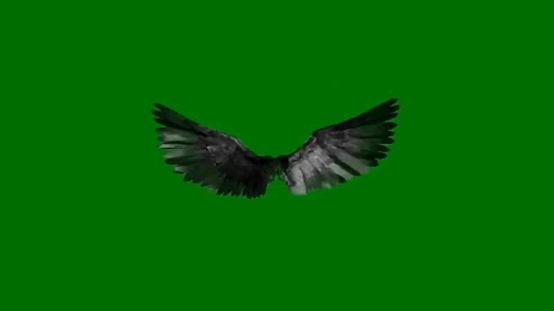 绿屏抠像黑色的翅膀.jpg