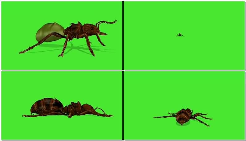 绿屏抠像蚂蚁.jpg